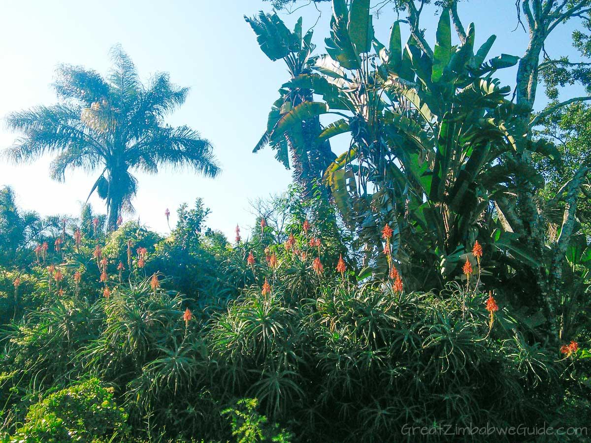 Ewanrigg-Botanical-Gardens-Harare-Zimbabwe-Aloes-02