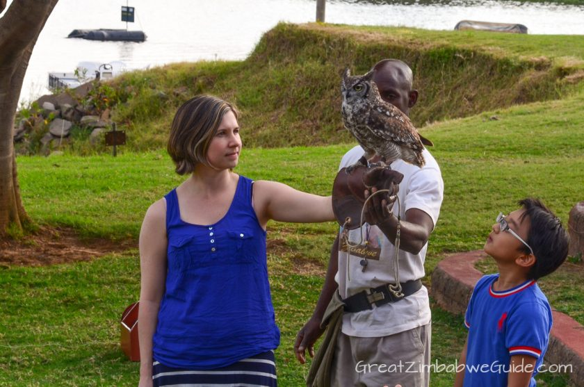 Kuimba Shiri Bird Park Harare Zimbabwe Owl