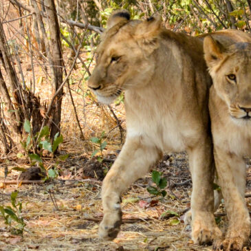 Best Vic Falls activities: 8. Have an up-close animal encounter in Victoria Falls