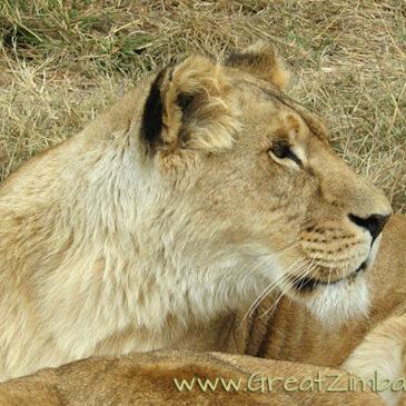 Best Vic Falls activities: 10. Go on a mini-safari in Victoria Falls
