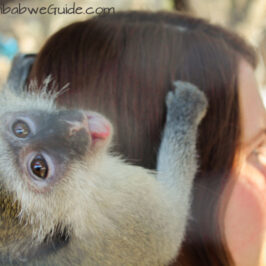 Bally Vaughan Twala Trust monkey tongue