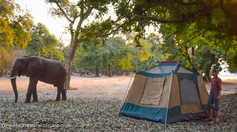 Mana Pools elephant at camp
