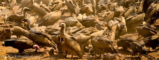 The Vulture Restaurant at Victoria Falls