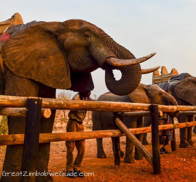 Wild Horizons elephant safari-0092