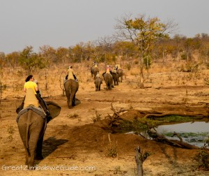 Wild Horizons elephant safari-1-3