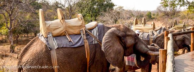Wild Horizons elephant safari-1-6