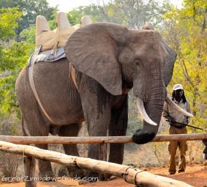 Wild Horizons elephant safari-1-7