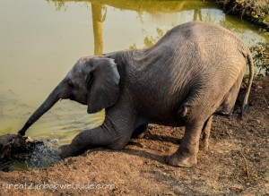 Wild Horizons elephant safari-2-2
