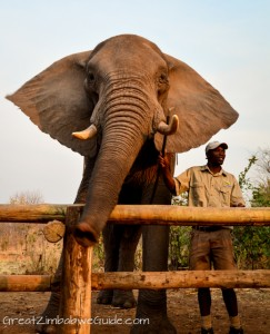 Wild Horizons elephant safari-2-3
