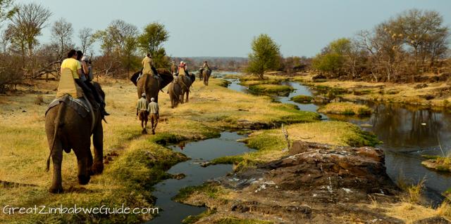 Wild Horizons elephant safari-3-2