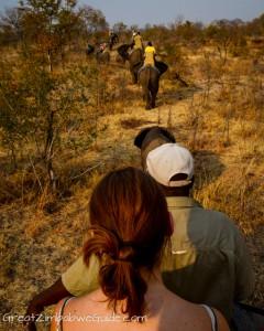 Wild Horizons elephant safari-3