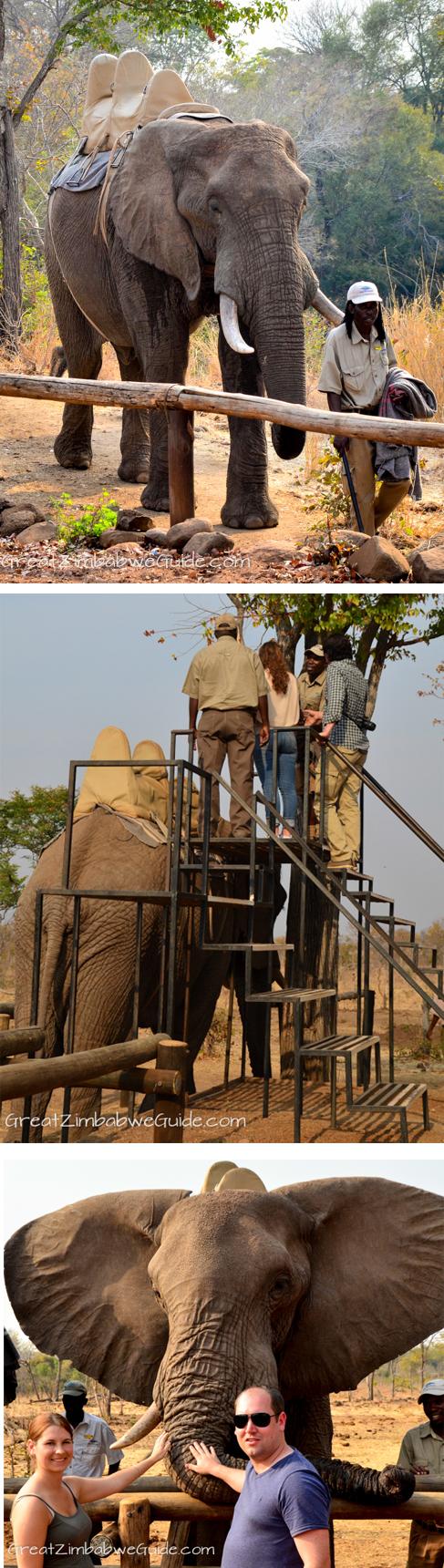 wild horizons elephant safari 123