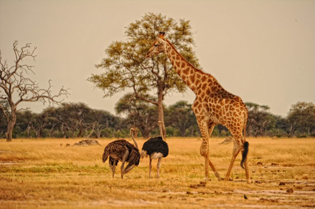 http://www.africanbushcamps.com/image-gallery/somalisa-camp-gallery/