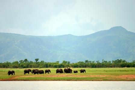 http://www.zimparks.org/index.php/gallery/kariba-matusadona/kariba-photos-6-150