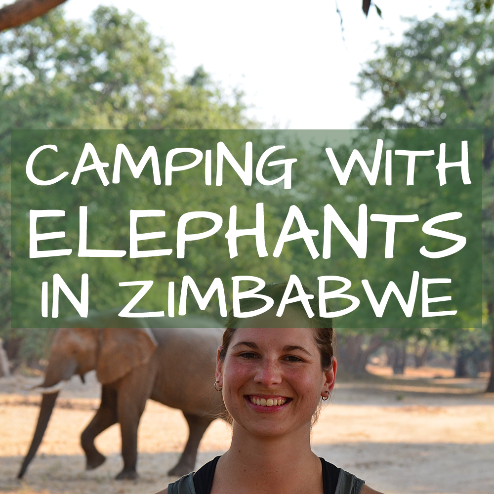 Camping with Elephants in Zimbabwe Africa