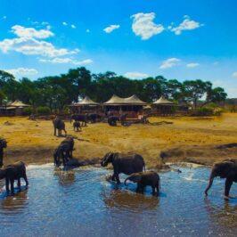 Somalisa Camp African Bush Camps