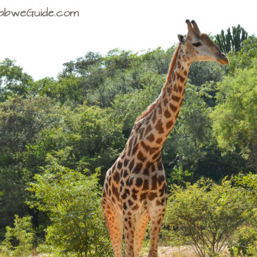 Mbizi Game Park: A relaxing bush location close to Harare Airport