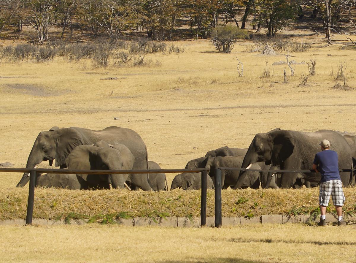 Hwange safari lodge elephants