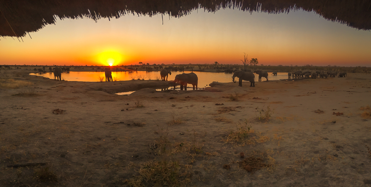 water hole africa