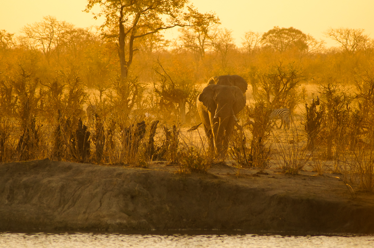 africa safari zimbabwe hwange