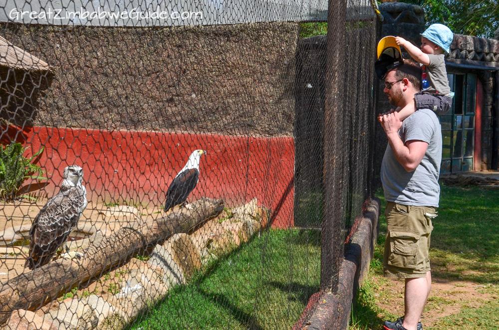 Bird Park Harare Zimbabwe Activities Kids 2