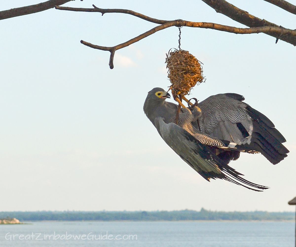 Bird Park Harare Zimbabwe Activities Lake