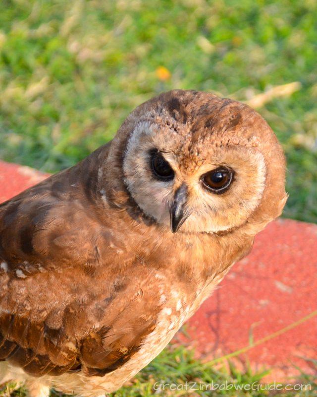 Bird Park Harare Zimbabwe Activities Owl