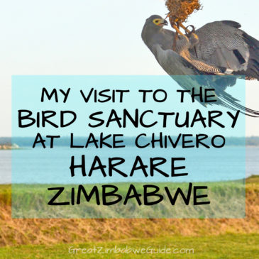 My visit to Kuimba Shiri Bird Park, Harare: The ideal family day out