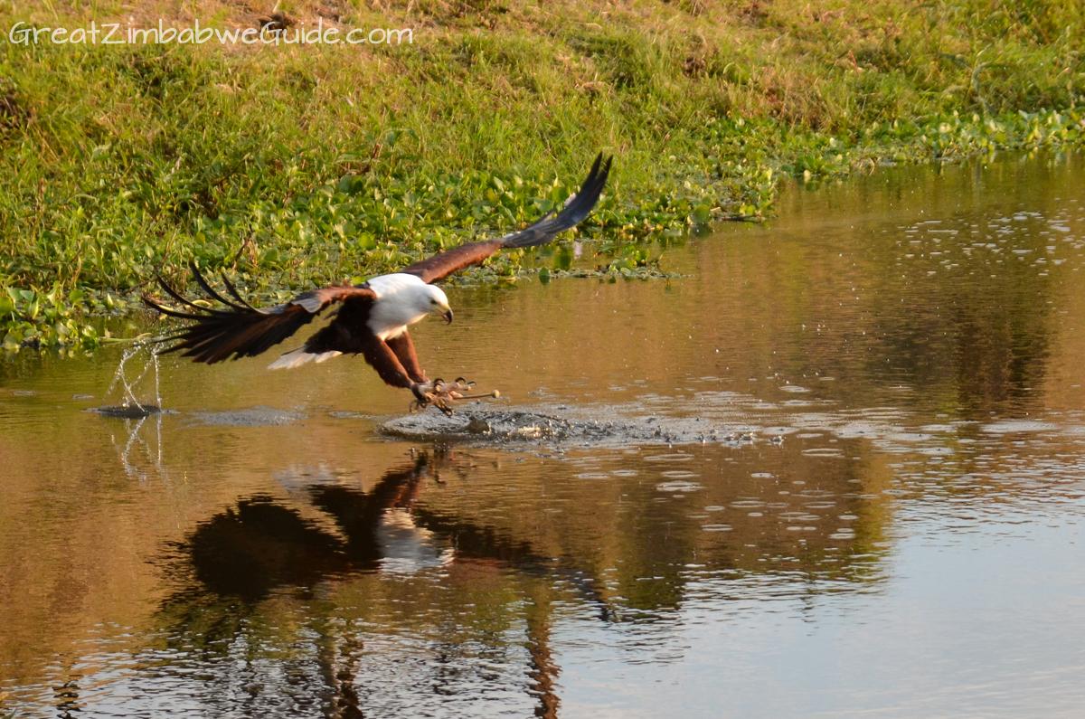 Bird Park Harare Zimbabwe Activities eagle