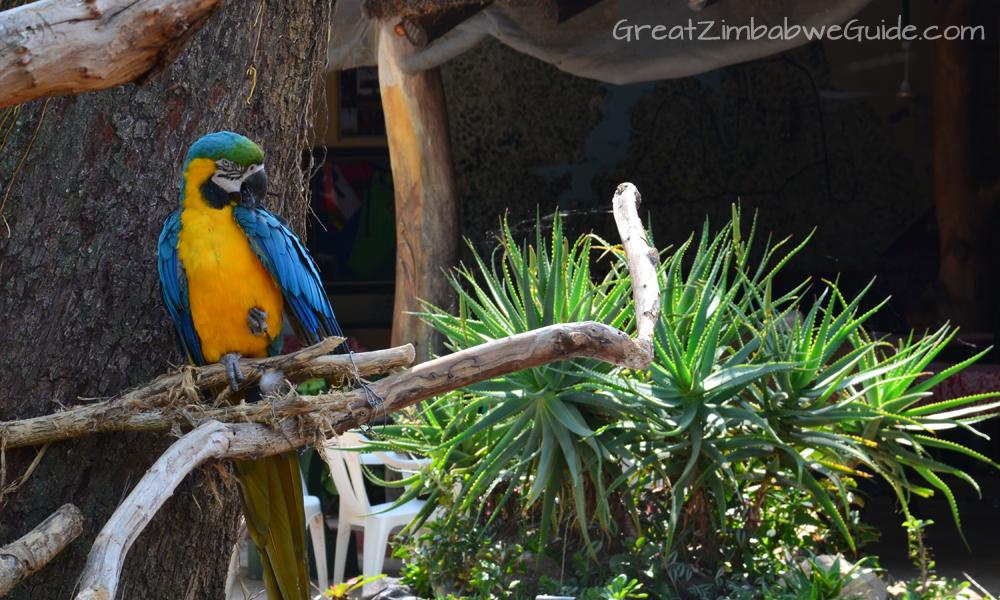 Bird Park Harare Zimbabwe Family Day