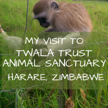 Twala Trust Animal Sanctuary: A place of laughter and love