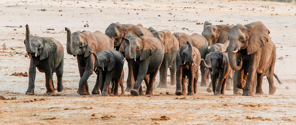 Hwange Zimbabwe Elephants Arturcabral