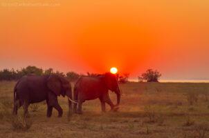 Matusadona National Park Kariba Zimbabwe Elephant