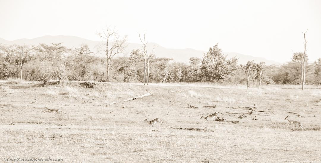 Great Zimbabwe Guide Wildlife Photography Kariba 01