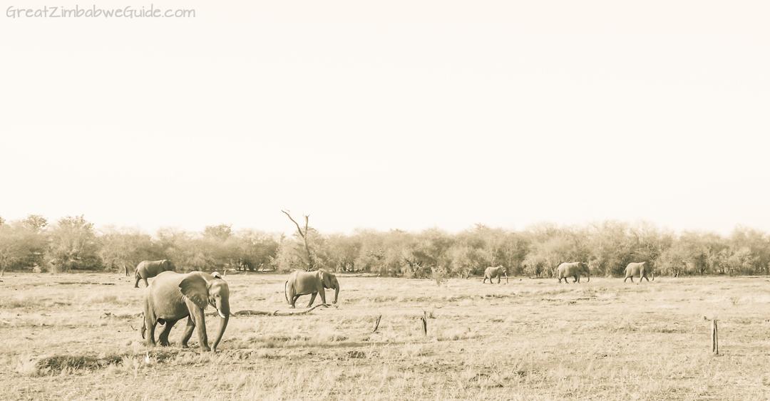 Great Zimbabwe Guide Wildlife Photography Kariba 02