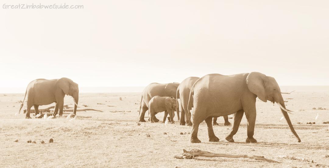 Great Zimbabwe Guide Wildlife Photography Kariba 04