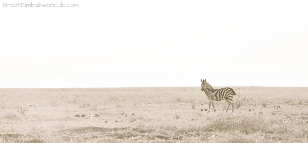 Great Zimbabwe Guide Wildlife Photography Kariba 07