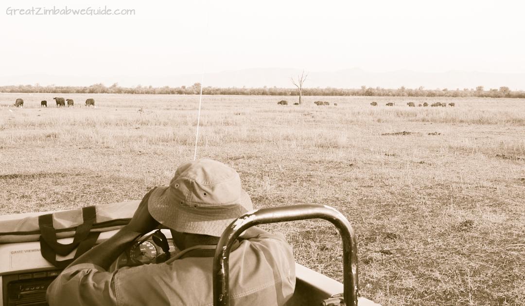 Great Zimbabwe Guide Wildlife Photography Kariba 09