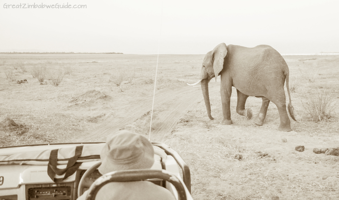 Great Zimbabwe Guide Wildlife Photography Kariba 10