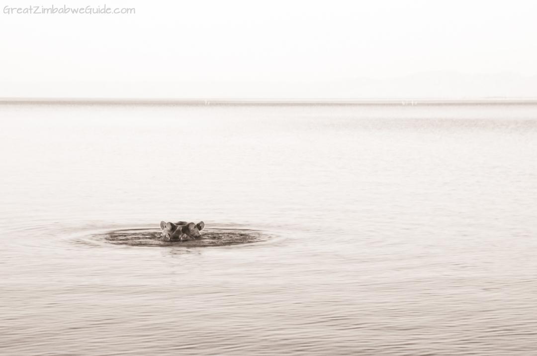 Great Zimbabwe Guide Wildlife Photography Kariba 17
