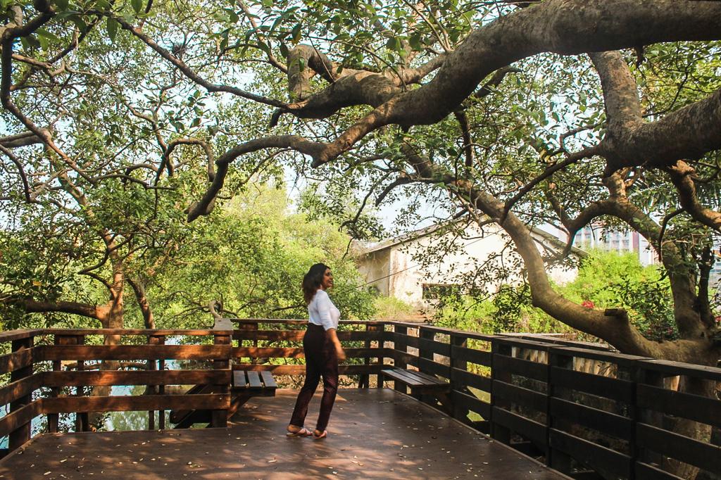 Mangrove boardwalk - an offbeat thing to do in Panjim city
