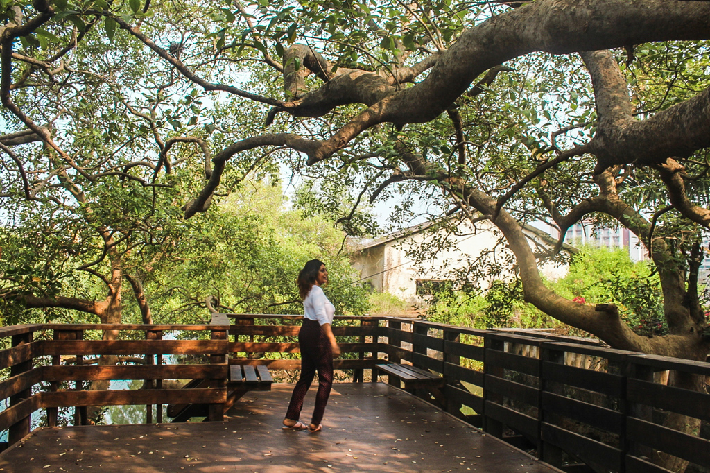 Mangrove Boardwalk Panjim - Instagrammable Places in Goa
