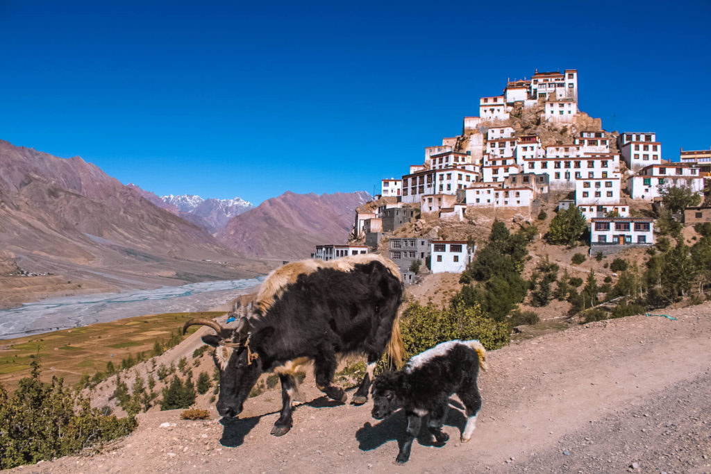 Kee Monastery in Spiti Valley Itinerary