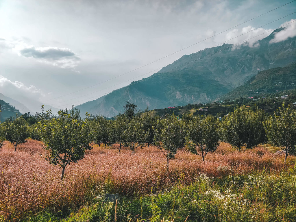Kinnaur valley itinerary for 10 days