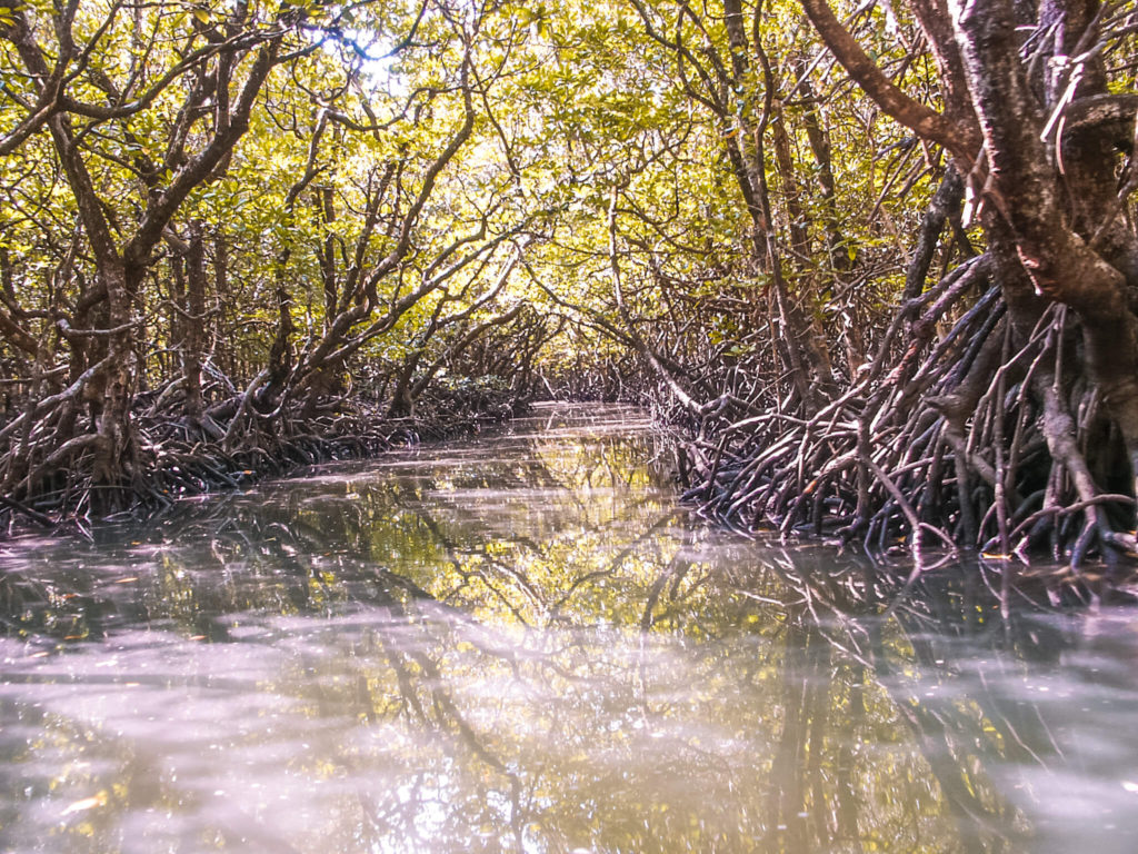Mangrooves in Andaman and Nicobar islands