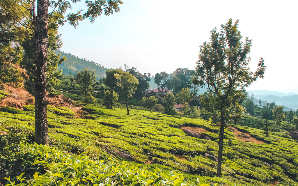 Munnar - Backpacking Kerala travel guide and Kerala itinerary for 10 days