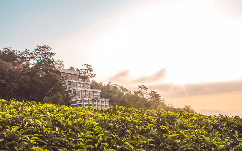 Chandys Wind Woods Hotel - Hotels in Munnar overlooking the Munnar Tea Plantations and Munnar Hills