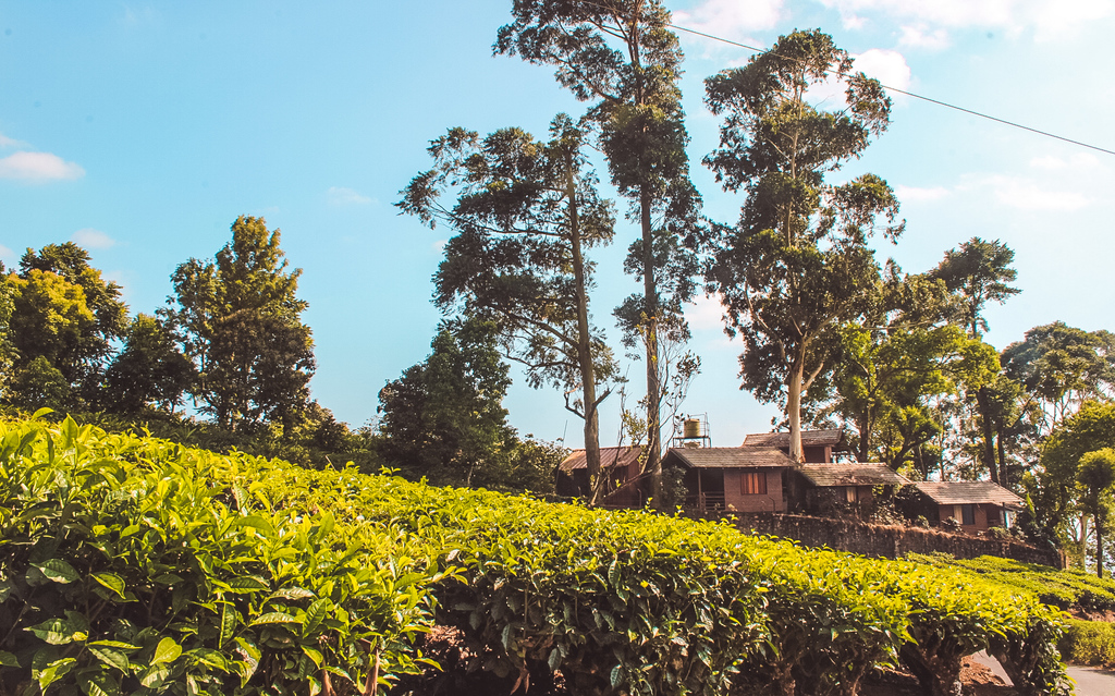 T6 Cottages - Hotels in Munnar overlooking the Munnar Tea Plantations and Munnar Hills