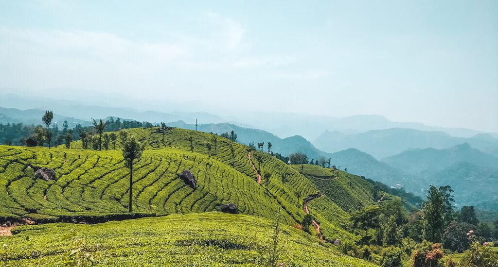 Munnar Tea Plantations in the Munnar Hills, Kerala, India