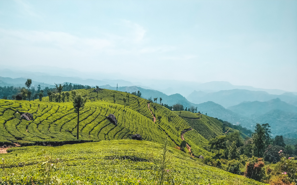 Ultimate Guide to the Munnar Tea Plantations – Visiting Tips and Tricks